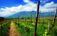 Le eccellenze vitivinicole svizzere all'insegna delle rarità e della qualità